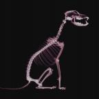 Дентальная рентгенография в ветеринарной стоматологии