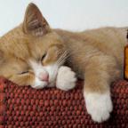 Стоматология кошек - в чем отличие?