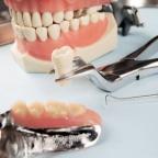 Экстракция зубов плотоядных: простые решения в повседневной практике