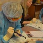 Современные стоматологические материалы в ветеринарной практике – методы и технологии работы