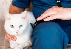 Резорбция зубов у кошек