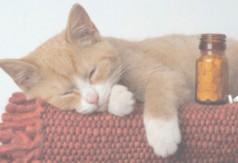 Стоматология кошек - простые истины