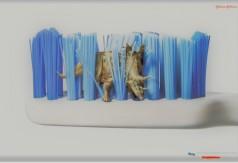 Начальный курс ветеринарной стоматологии